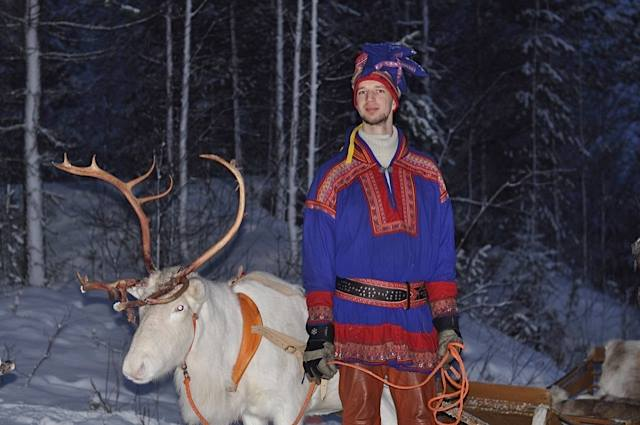 lapland reindeer Northern Ireland